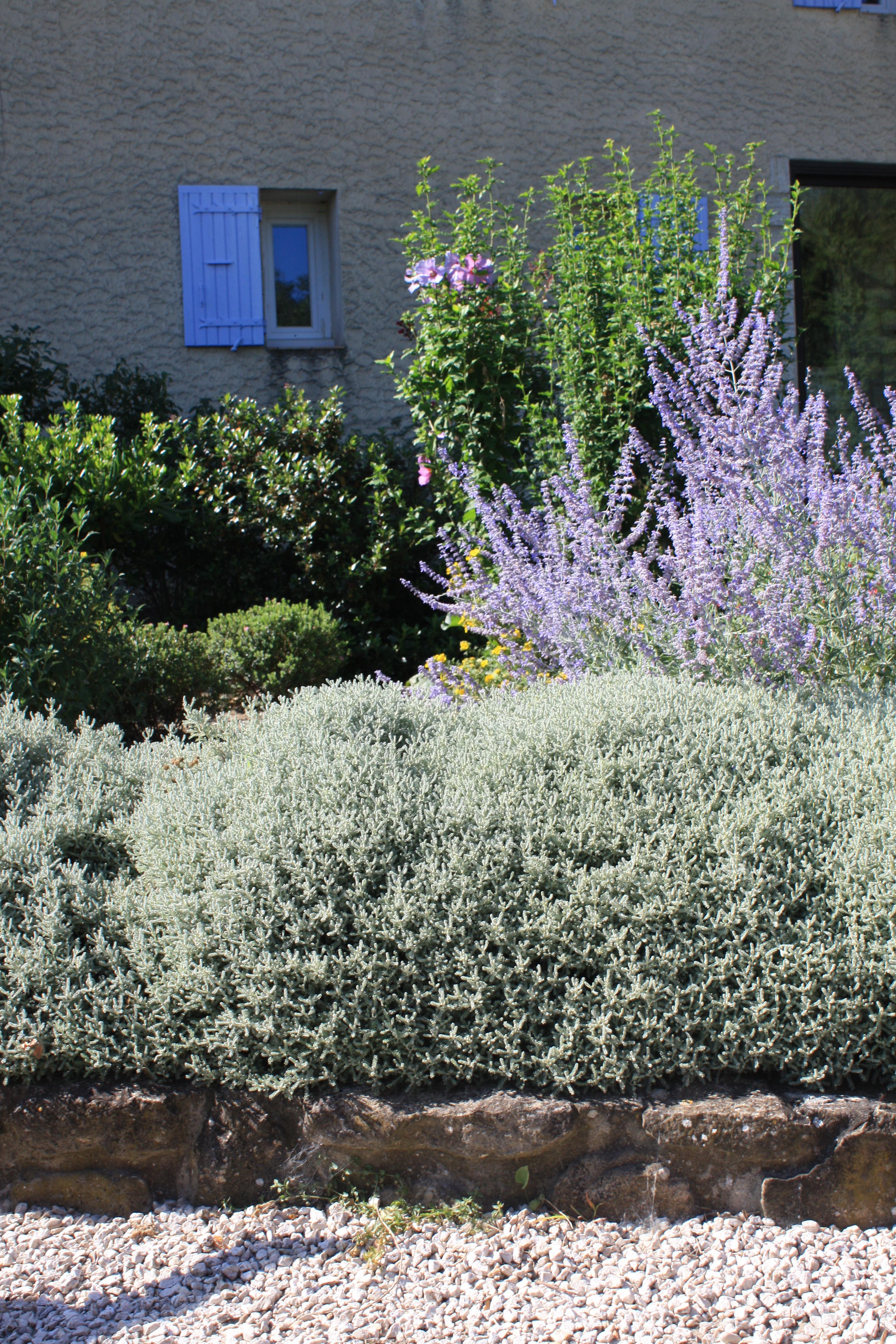 Plantes pour bordures fleuries for Plantes fleuries pour jardin