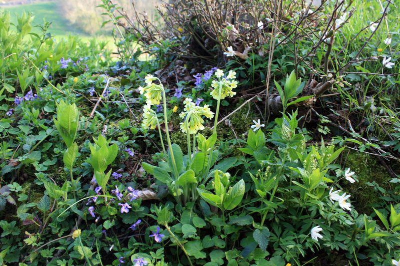Fleurs-des-bois-avril2010