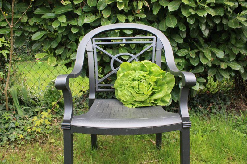 Salade_fauteuil