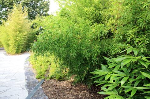 jardin de bambous place des jardins. Black Bedroom Furniture Sets. Home Design Ideas
