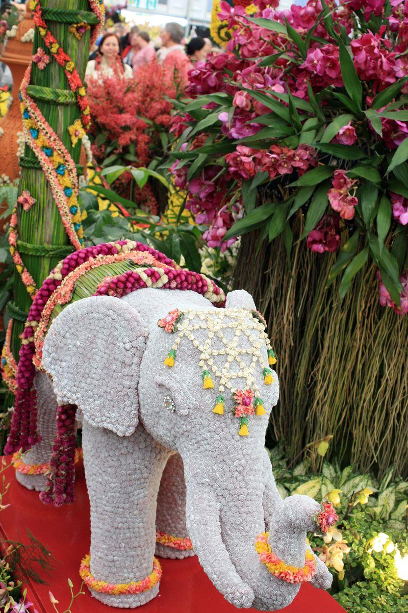 CFS_elephant