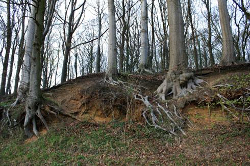 Racines d'arbres Kemmel020411IMG_4779