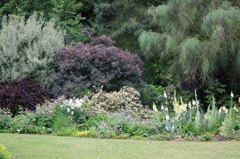 rosa glauca un tout terrain tr s moderne place des jardins. Black Bedroom Furniture Sets. Home Design Ideas