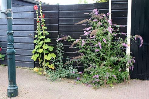 3-jardin de rue à Veere260710IMG_6531
