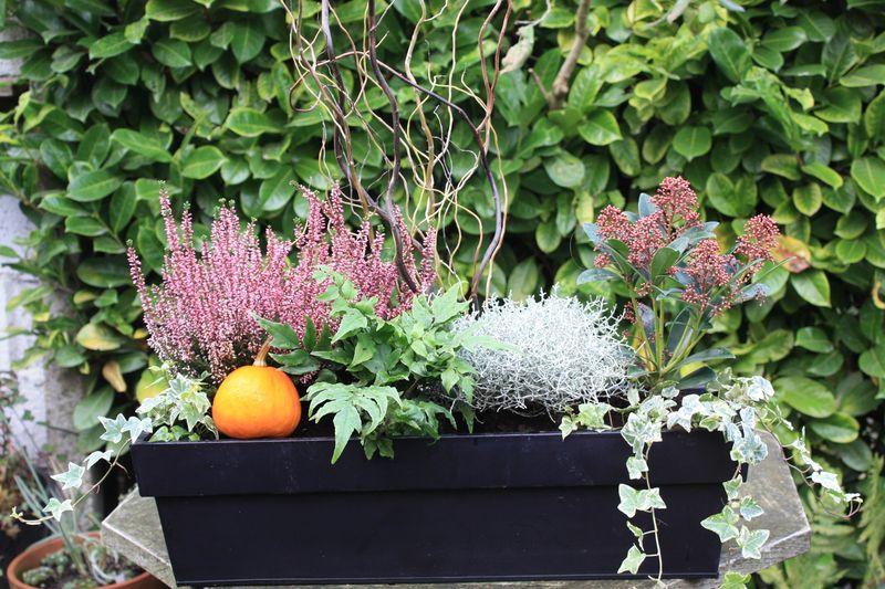 Composition d 39 hiver place des jardins for Composition florale exterieur hiver