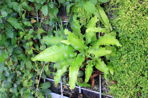 Jardin vertical géants070910IMG_9061