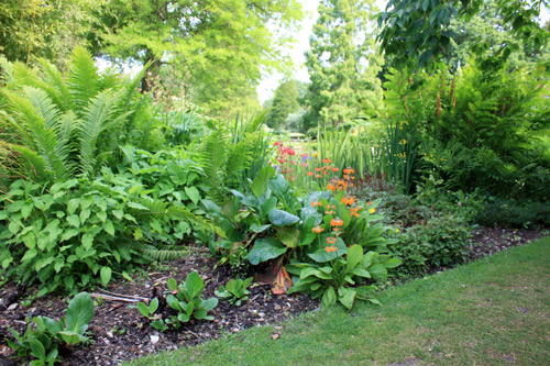Jardin-exotique-beth-chatto9236