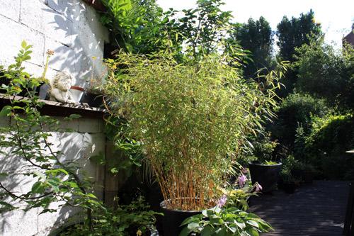 Bambou-fargesia-20120711-2012_07_11_9999_14