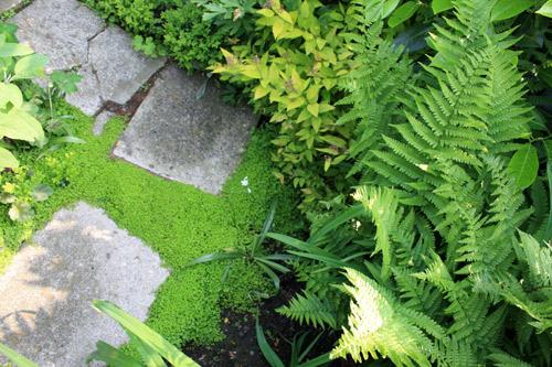 Jardin-zen-pas-japonais-24052012-(6)